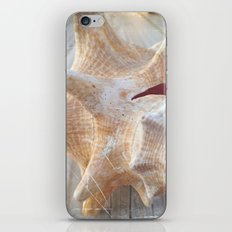 Conch iPhone & iPod Skin