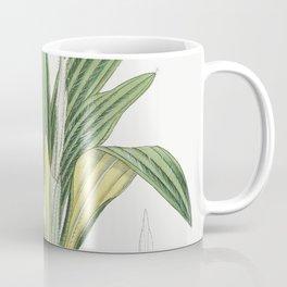 Celmisia spectabilis (1882) by John Fitch Coffee Mug
