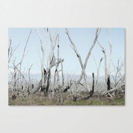 Silvered Canvas Print