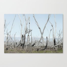 Silvered Canvas Print