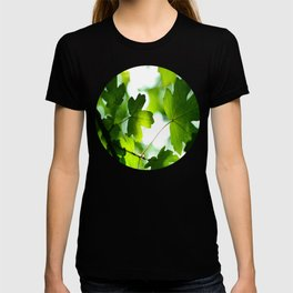 Green Baby Maple Leaves Round Photo T-shirt