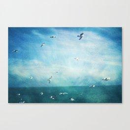 brighton seagulls 3 Canvas Print
