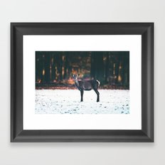 Red deer hind standing in snow. Framed Art Print