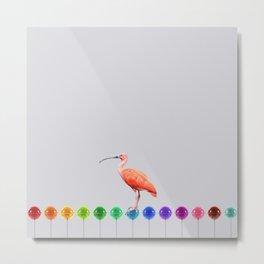 Colors flamigos Metal Print