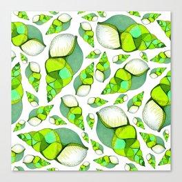 Green shells Canvas Print