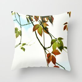 Creeper in autumn colors Throw Pillow