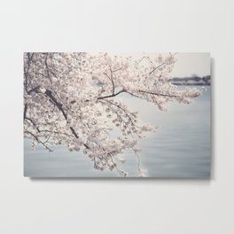 Cherry Blossoms of DC Edition 1 Photography Print Metal Print