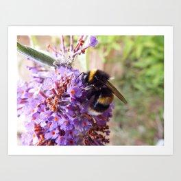 Bee on a Buddleia Flower Art Print
