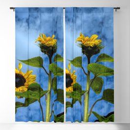 rooftop flowers Blackout Curtain