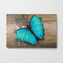 Weathered wings Metal Print