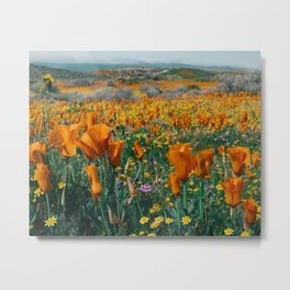 Wildflower Poppy Superbloom Metal Print