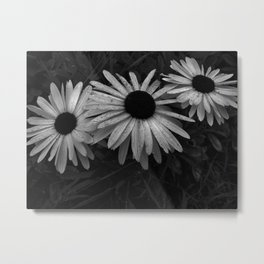 Black and White Daisys Metal Print