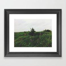 Pine Tree Hill Framed Art Print
