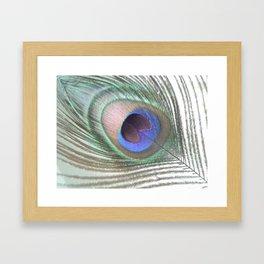 PEACOCK FEATHER IV Framed Art Print
