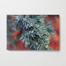 Pine After Rain 2 Metal Print