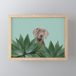 Grey Weimaraner Dog between Agave Leaves Framed Mini Art Print