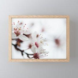 Plum Tree Framed Mini Art Print
