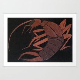 Dermaptera (Ear Wig) Art Print
