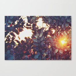 A sunny afternoon Canvas Print