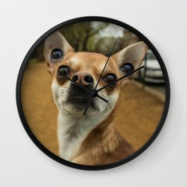 Four eyed Chihuahua?! Wall Clock