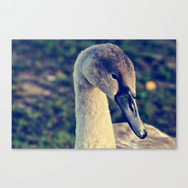the youngster Canvas Print