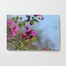 Flowery season Metal Print