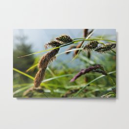 Alaskan Foliage Photography Print Metal Print