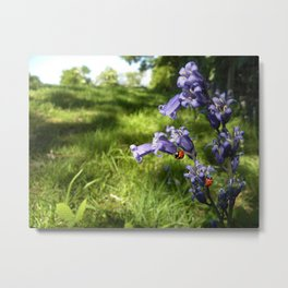 Ladybug loves bluebells Metal Print