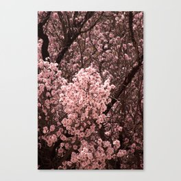 Spring Blossoms - II Canvas Print