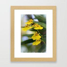 Yellow Orchids Framed Art Print