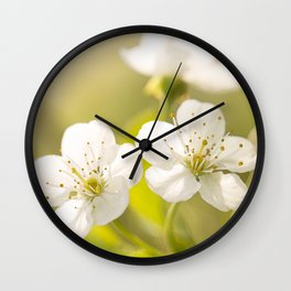 Beautiful cherry blossom on a vivid green background - summer atmosphere Wall Clock