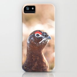 Male red grouse iPhone Case