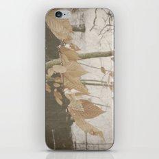 Few Fall iPhone & iPod Skin