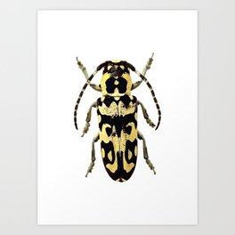 Longicorn Beetle Art Print