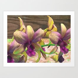 The orchids are blooming. Art Print