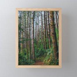 Trees: IV // Oregeon Framed Mini Art Print