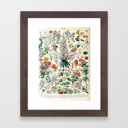 Adolphe Millot - Fleurs B - French vintage poster Framed Art Print