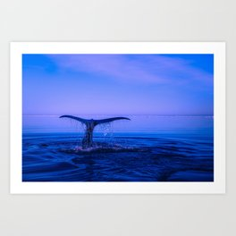 Whale Breaching With Tail Art Print
