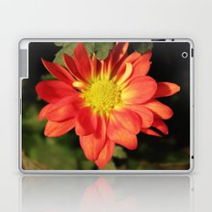 Pretty holiday orange daisy flower. Floral nature garden photography. Laptop & iPad Skin