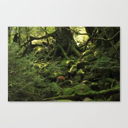 Deer in Forest on Yakushima Island, Japan Canvas Print