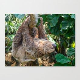 Sloth. Canvas Print