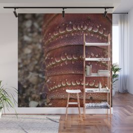 By the Seashore - Shellfish Wall Mural