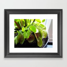 Venus Flytrap Framed Art Print
