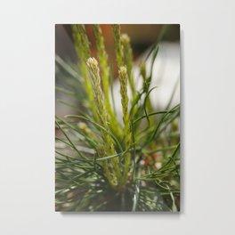 Pine flower Metal Print