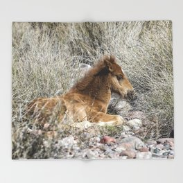 Salt River Colt Taking a Rest Throw Blanket