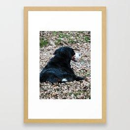 Berner in Fall Leaves Framed Art Print