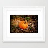 pumpkin Framed Art Prints featuring Pumpkin by Amy Anderson
