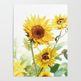 Watercolor Sunflower Poster
