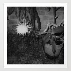 Bloomin' Midnight Art Print