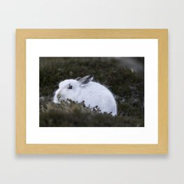 Close to wild mountain rabbit Framed Art Print